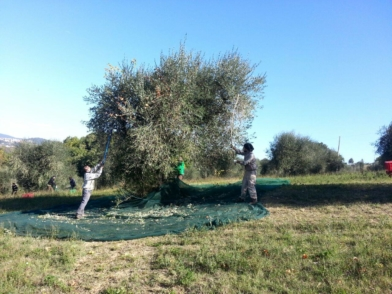 olio extravergine dop Umbria